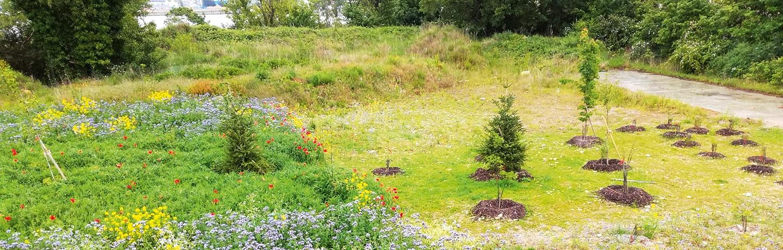 Après travaux: parcelles expérimentales avec sols reconstruits et végétalisés.